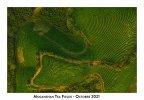 Tea Fields Moganshan Color.jpg
